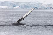 _m4_7580-antarktyda-wieloryb