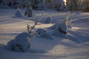 _m4_8787-finlandia-kuusamo