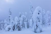 _m4_9429-finlandia-kuusamo