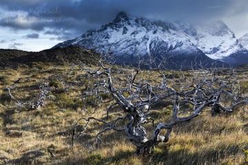 patagonia-chile-zima-_M4_0141