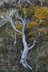 patagonia-chile-zima-_M4_0262