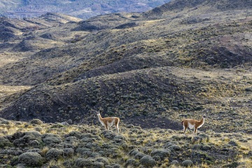 patagonia-chile-zima-_M4_0821