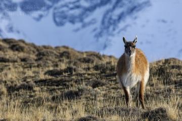 patagonia-chile-zima-_M4_0869