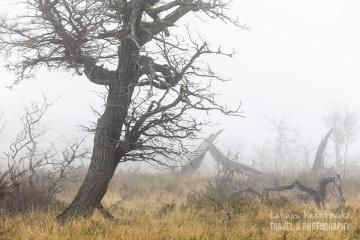 patagonia-chile-zima-_M4_1043
