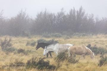 patagonia-chile-zima-_M4_1051