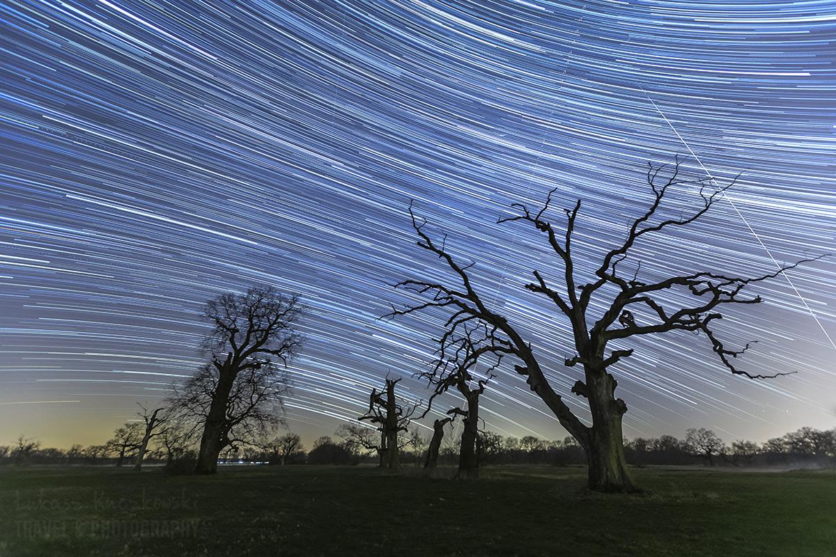 Rogalinek noc dęby gwiazdy