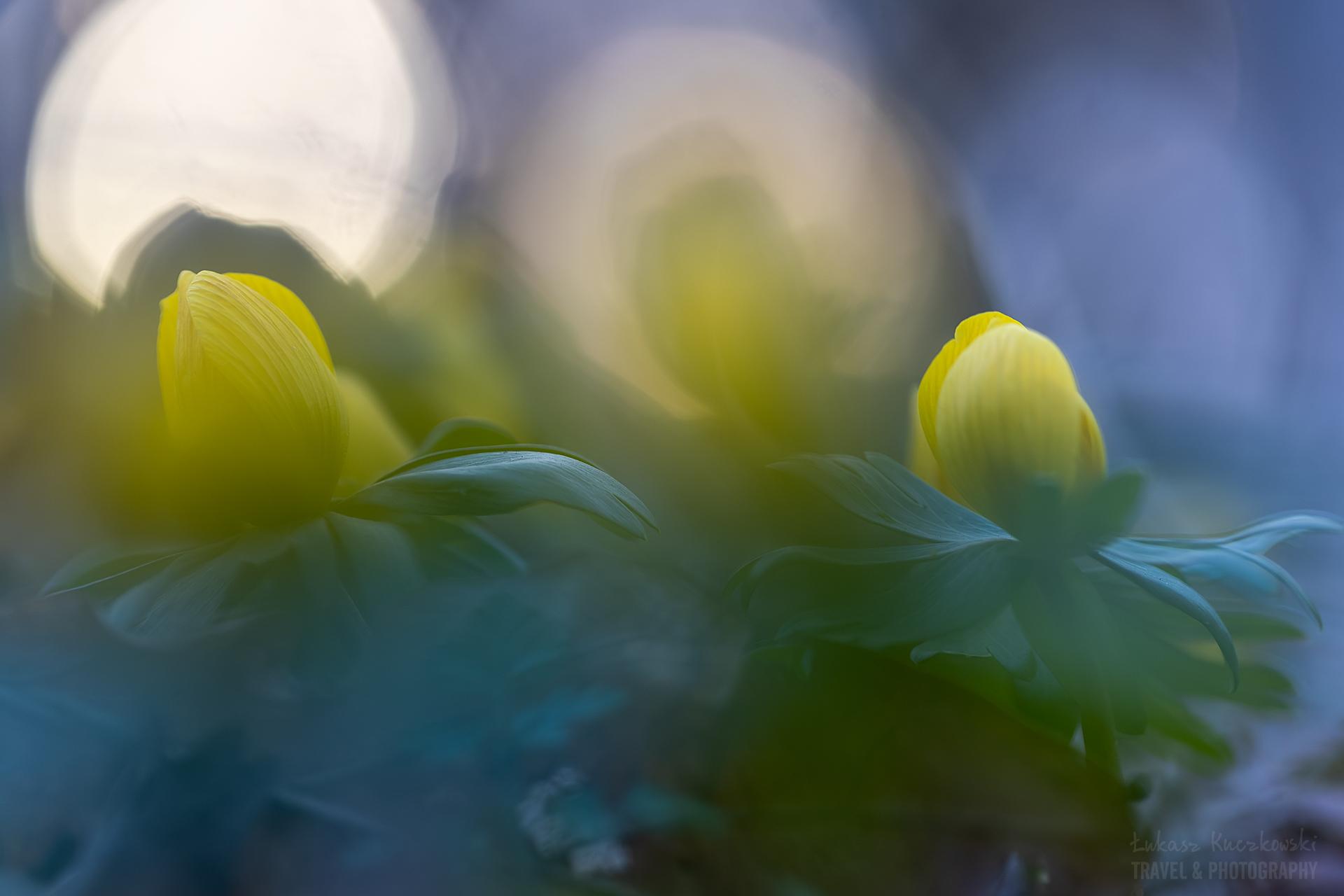 ranniki-wiosna-kwiaty